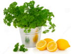 Parsley and Lemons make cum taste better